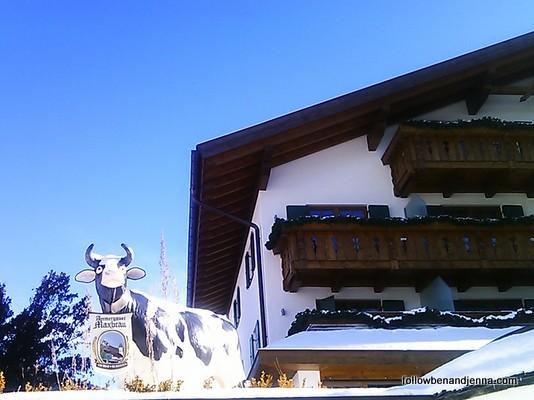 Maxbrau cow Oberammergau
