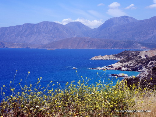 yellow wildflowers along Lasithi coastline of the Aegean in Crete
