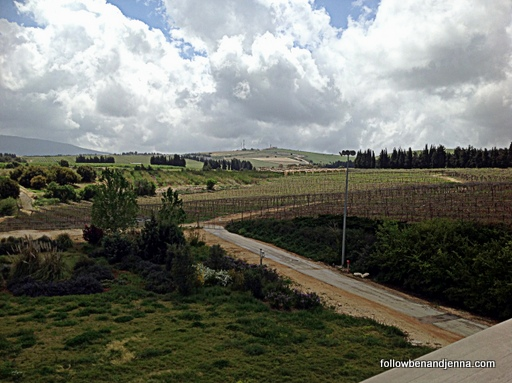 Israeli wine vineyard Golan Heights
