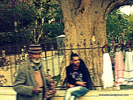 sycamore tree Jericho