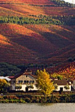 Where to Go Next: Watch Leaves Fall in Portugal's Douro