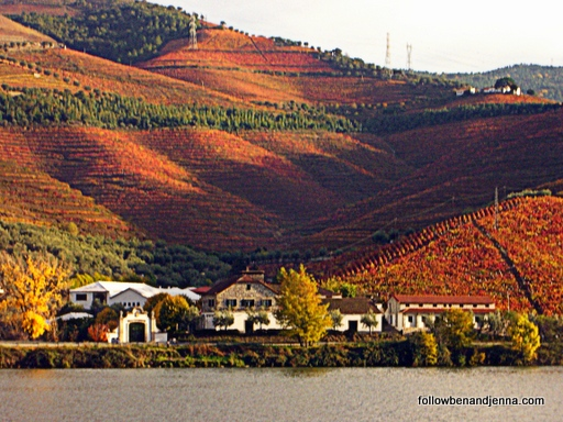estate Douro autumn leaves