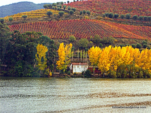 Douro autumn leaves small estate
